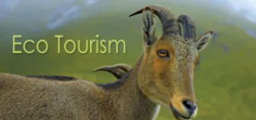 Eco Tourism Solutions