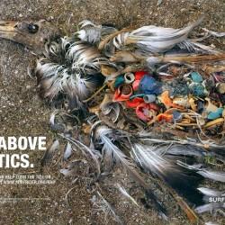 Environmental Damage Of Plastic Waste Eco Friendly India